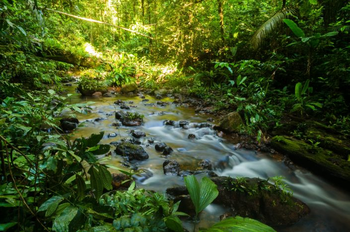 Stream in the rainforest / Molokoi trail (Cacao - French Guiana)