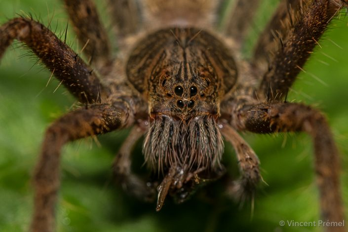 Spider sp. / Ecuador